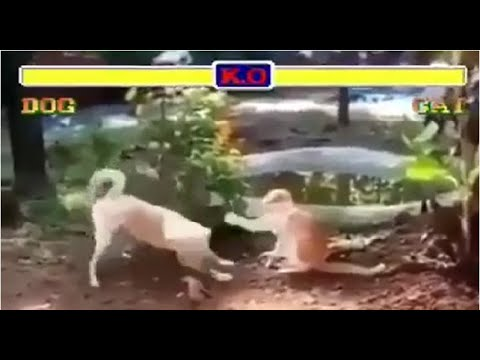 Dog vs Cat Street Fighters Version 2019