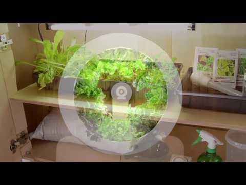 Ogarden - Mon jardin, à la maison