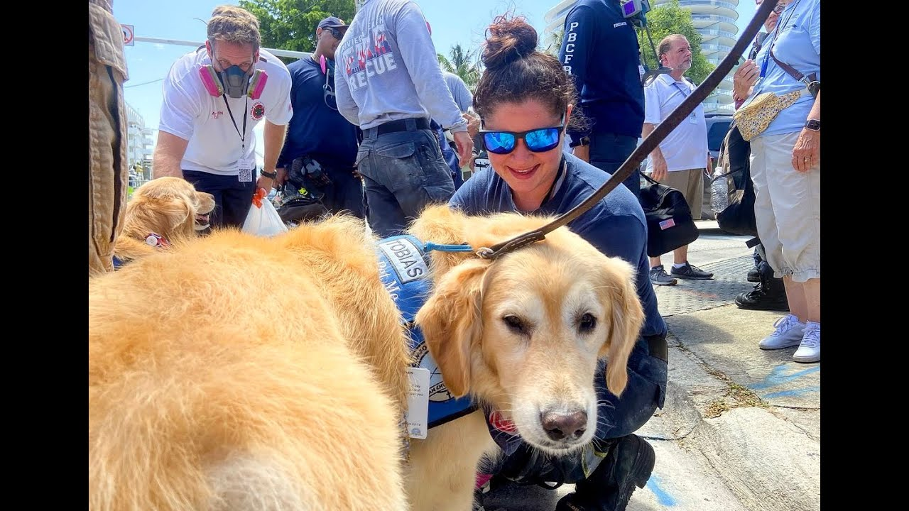 High court rules comfort dogs may be allowed in courtrooms in case ...