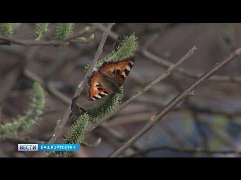 Синоптики рассказали о погоде в Башкирии на апрель