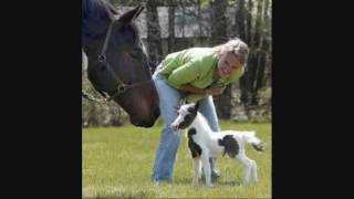 Smallest Horses on Earth! Thumbnail