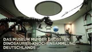 Senckenberg - mehr als große alte Knochen