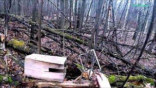 Охота на куницу с капканами КП-120 ЯЩИЧНЫМИ. Первый опыт (Будни охотника и рыбака)