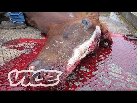 An Inside Look at the Exotic Animal Trade: Profiles by VICE (Trailer)