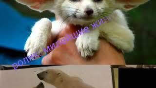 Уроки зоологии 7 класса:ролик (милые животные)