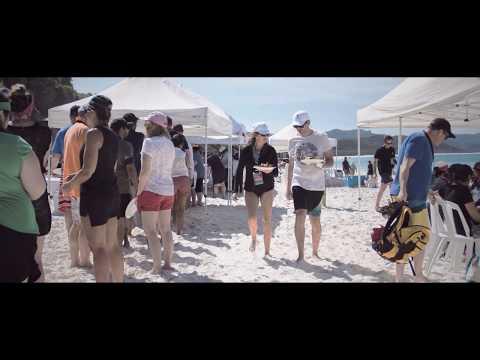 Whitehaven Beach Part 2- Fish D'vine