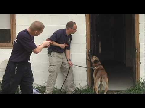 K9 Police Dog Training (Part 1 of 2)