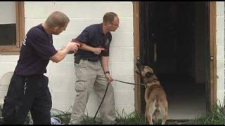 K9 Police Dog Training (Part 1 of 2)