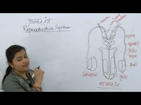 [01] Reproductive System Part -1   General Science Classes For all Competitive Exams