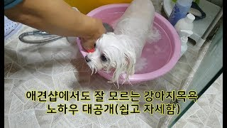 Dog Grooming - Bathing know-how, Easy washing dog face (easy and detailed)