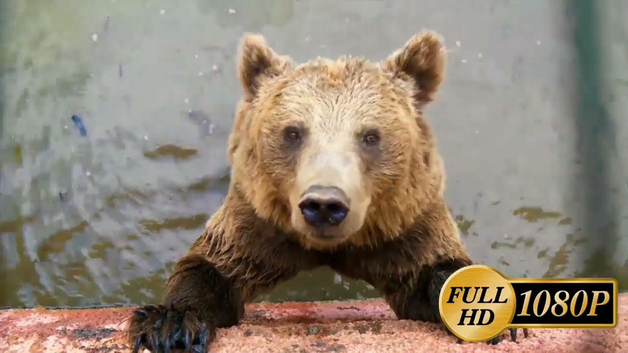 NEW ZOO VIDEOS #Animals #Bear #Snake  - YouTube