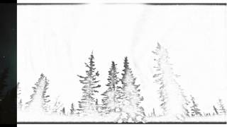 Auto Draw 2: Aurora Borealis Over Spruce Trees, Glenallen, Alaska