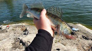 Рыбалка на Ириклинском водохранилище Ловля судака летом