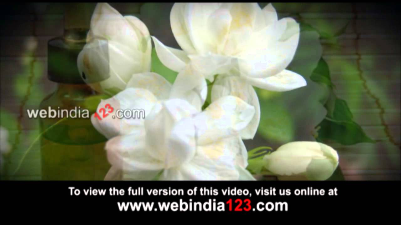 Jasmine Cultivation Youtube