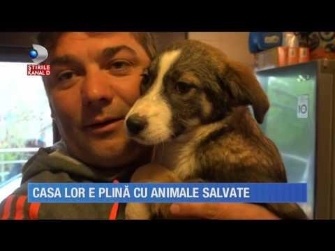 """Stirile Kanal D (08.05.2017) - Casa lor e plina de animale salvate! Rubrica: """"Salvam suflete!"""""""