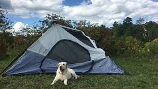 "Ultimate ""PUP"" Tent"