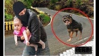 Самая умная и самая верная собака защищает владельца от нападения незнакомых людей