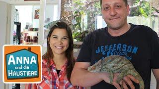 Chamäleon  Information für Kinder  Anna und die Haustiere