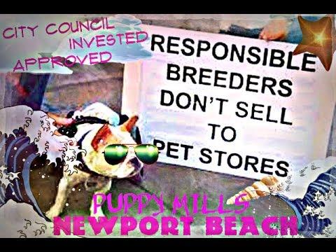 NEWPORT BEACH COMPANION ANIMAL ADVOCATE KELLY SAWYER- O.C.CRUELTY BANS ELEPHANTS & PUPPY MILLS
