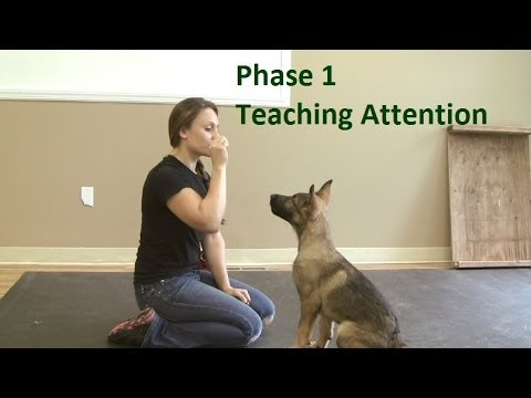 how-to-train-a-dog-to-pay-attention-(k9-1.com)