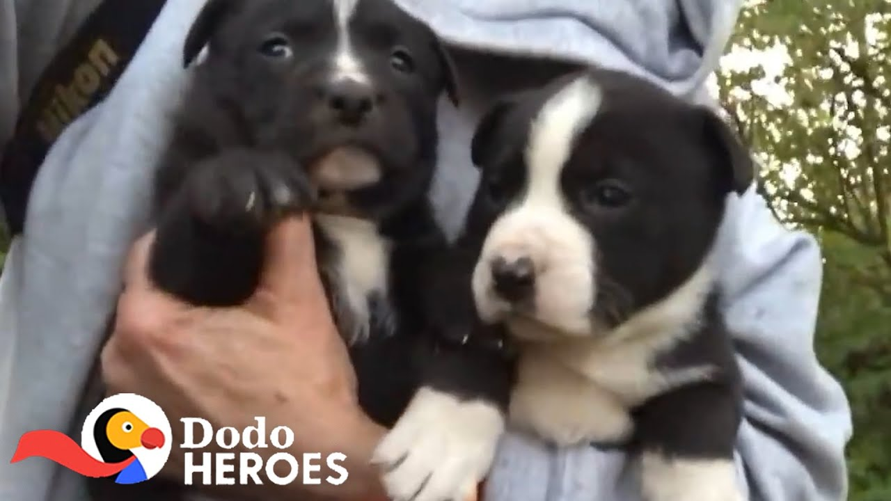 This Woman Saves Dogs From The Streets of St. Louis Every Single Day | The Dodo Heroes