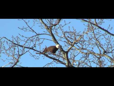 Where Eagles Fly - Mystic Lakes