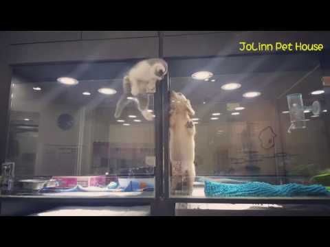 Kitten Escapes Cage to Play With Puppy