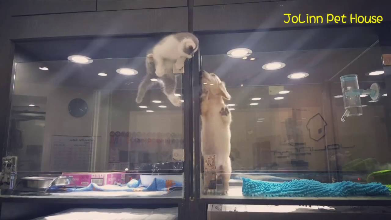 Kitten Escapes Cage to Play With Puppy & Kitten Escapes Cage to Play With Puppy - YouTube