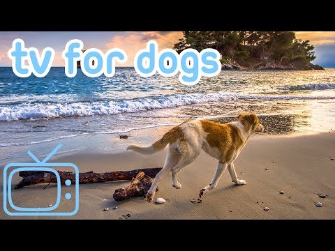 TV for Dogs! How to Relax My Dog TV with Calming Music!