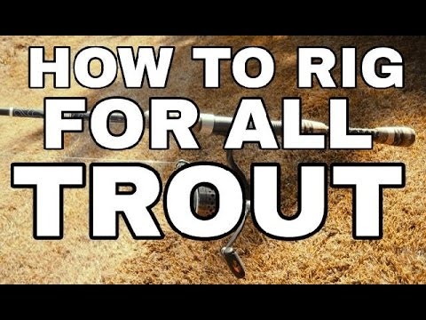How To Rig Up Your Trout Spin Rod for All Water Conditions & Fishing Styles