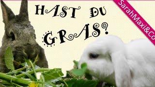 Fressen Kaninchen Gras? (Wiese, Kaninchen Futter, Hase, süß, lustig, Kaninchenhaltung)