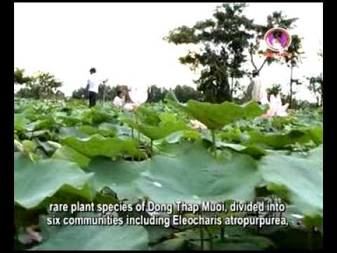 Vườn quốc gia Tràm Chim - Đồng Tháp  (tramchim.com.vn)