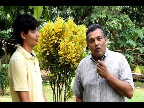 Pastor Milton Pagoada. La Ceiba, Atlantida, Honduras. Parte 1