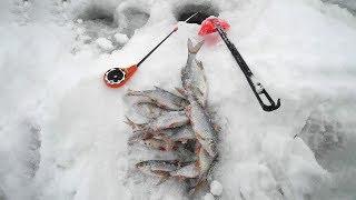 Рыбалка зимняя нижегородской область