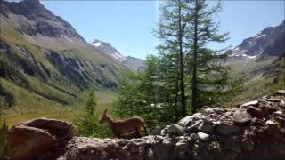 Valle D'Aosta agosto 2016 - Courmayeur, Val Ferret e Val Veny, ghiacciaio del Miage