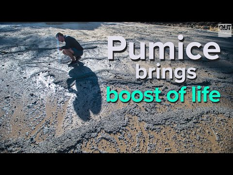 Pumice arrives bringing boost of life