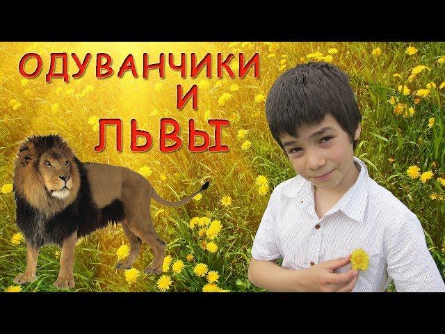 Одуванчики и львы