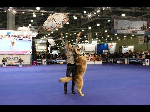 "Танцы с собаками ""Россия - 2015"". Dog Dancing. Canine Freestyle."