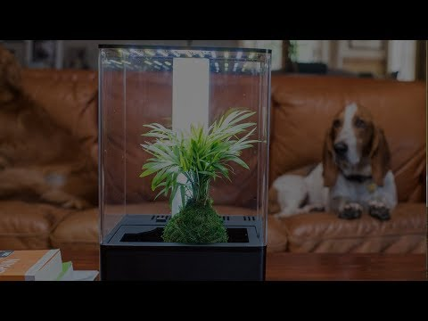 Bring nature inside with the EcoQube Desktop Greenhouse