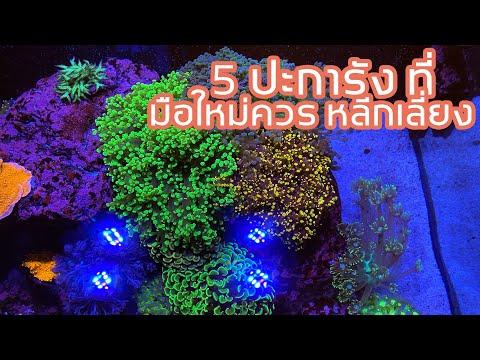 5 ปะการังที่มือใหม่ควร หลีกเลี่ยง...
