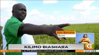 KILIMO BIASHARA | Kilimo cha mpunga Mwea