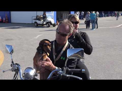 Jay Springsteen at Daytona TT 2017