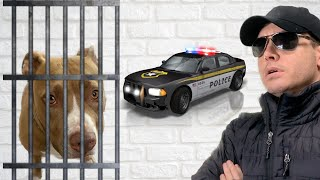 ARE DOGS PETS OR PRISONERS? | Robby and Penny