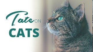 Tate on Cats