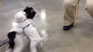 2nd Puppy Training Day