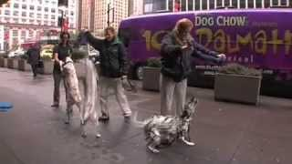 101 Dalmatians the Musical - Training Dogs for a Big Musical