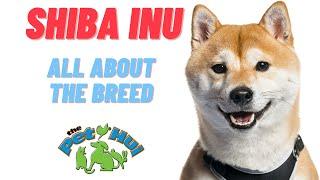 All About Dog Breed: Shiba Inu