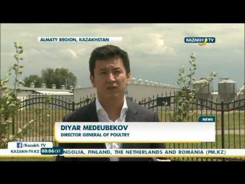 Kazakhstan increases egg export capacities