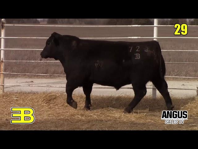 Benoit Angus Lot 29