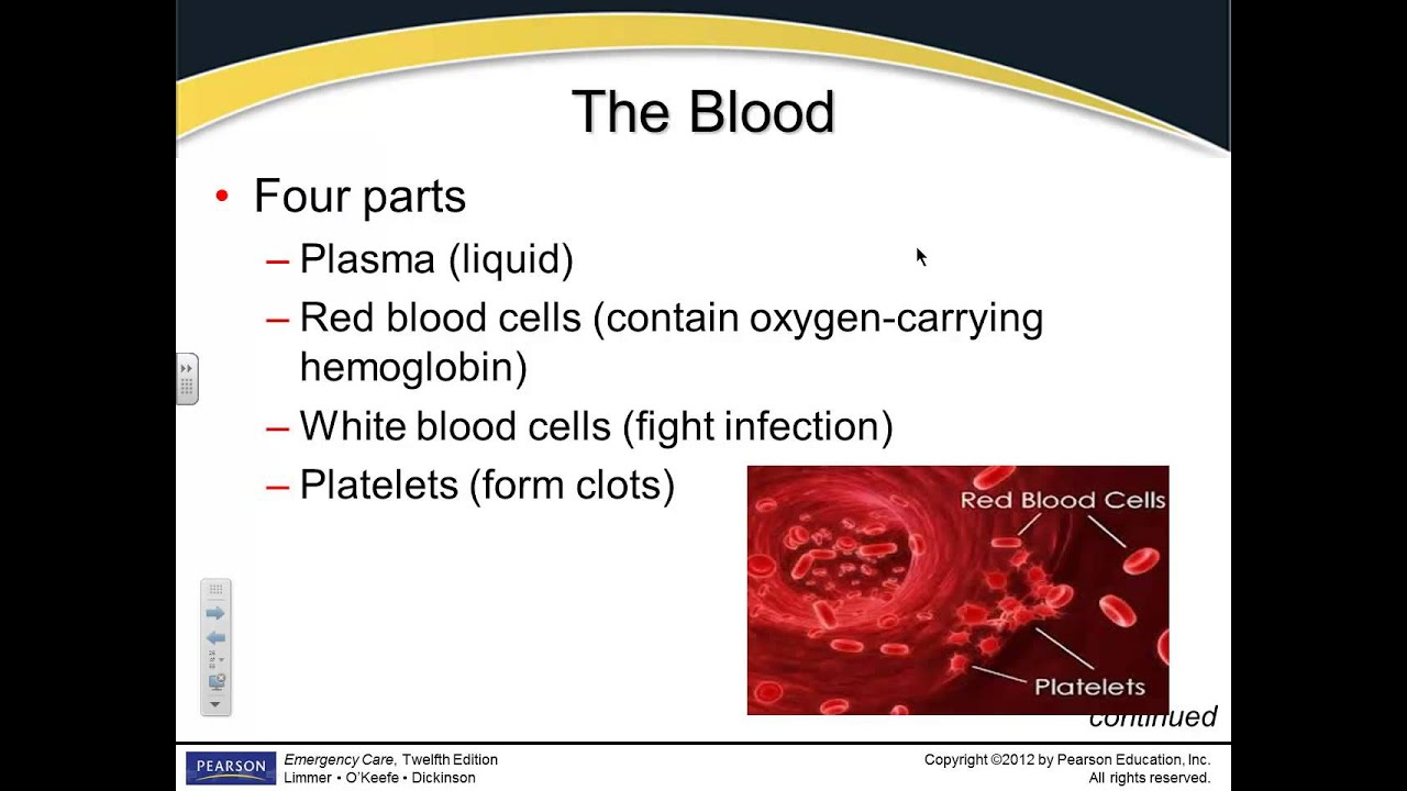 pathophysiology chapter 6 notes The cardiovascular system: the blood chapter 18 lecture notes psychology 411 chapter 3 lecture notes, structure of the nervous system, part 3 - (red.